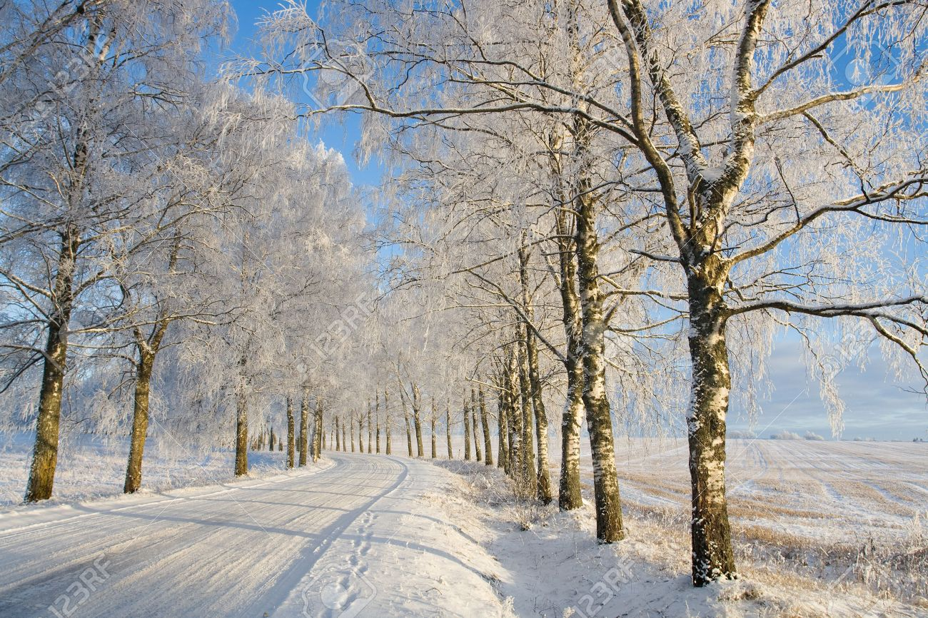 Country roud with frost covered birch tree allay in winter Stock Photo - 5941572