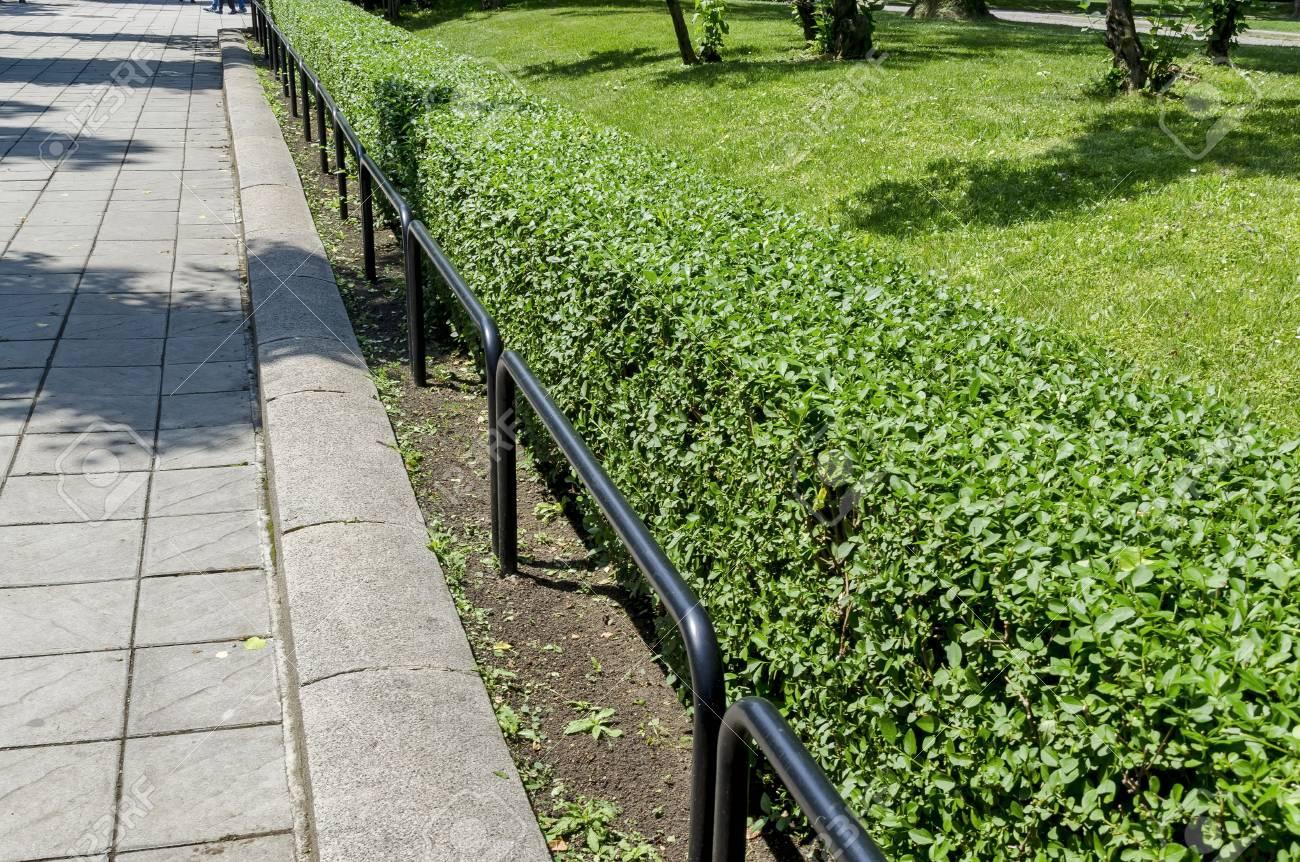 Clôture en métal et haie verte dans le jardin des médecins Sofia, Bulgarie