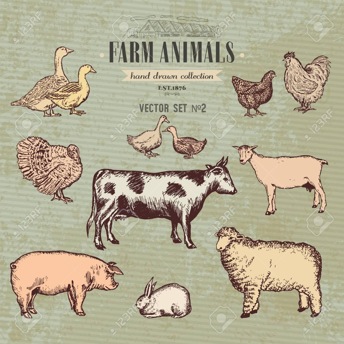 Farm animals vintage collection, cow, pig, goat, sheep, chicken, duck, goose, turkey rabbit hand drawn farm animals vector - 63789044