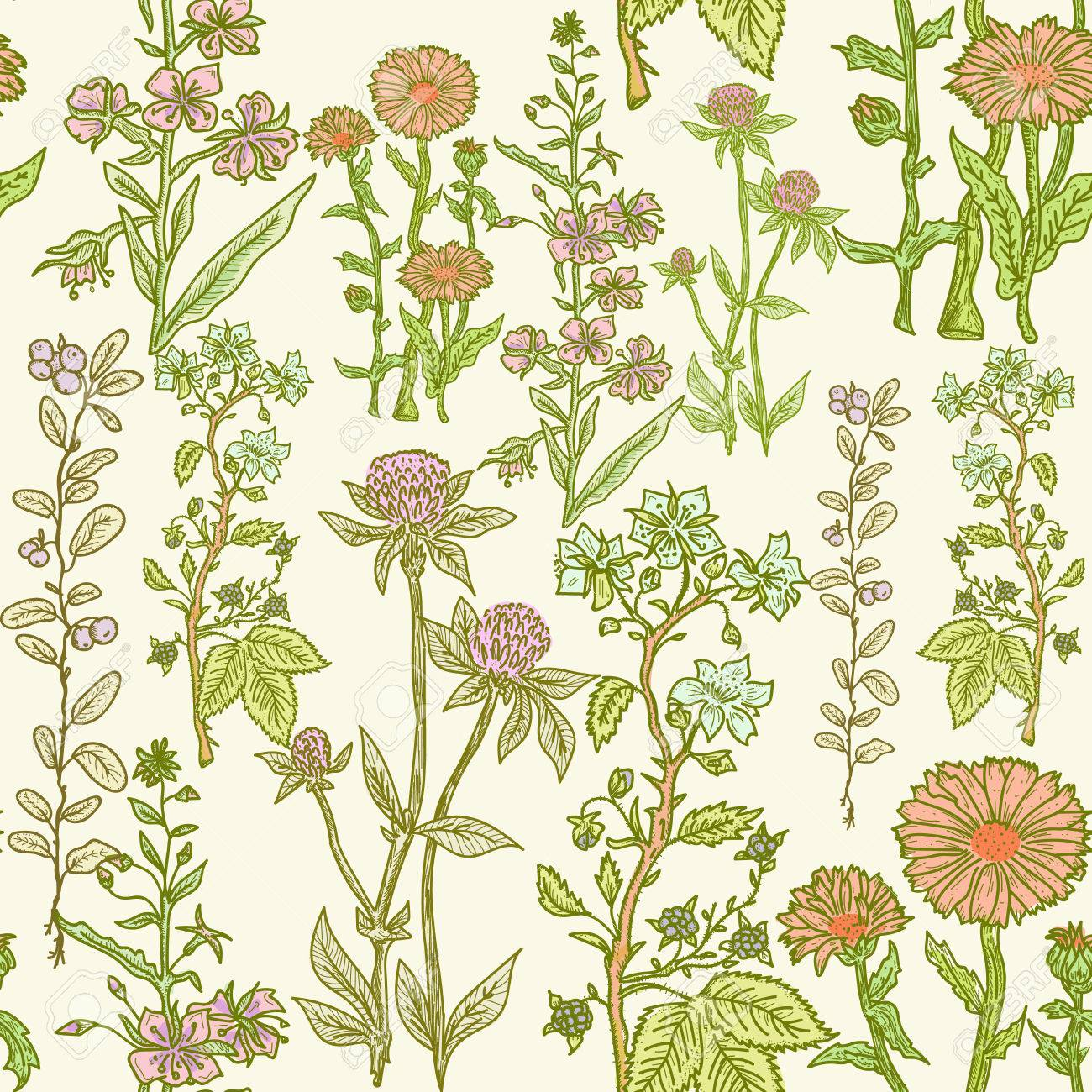 Seamless Vintage Herbal Pattern Medicinal Herbs And Plants Sketch Royalty Free Cliparts Vectors And Stock Illustration Image 69103252