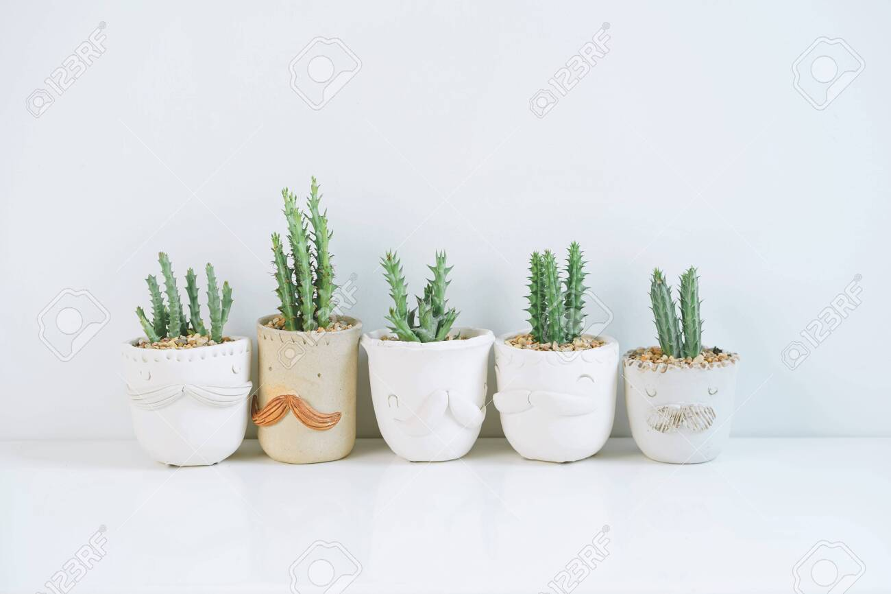 Succulents Or Cactus In Clay Pots Plants In Different Pots Potted Stock Photo Picture And Royalty Free Image Image 138170848