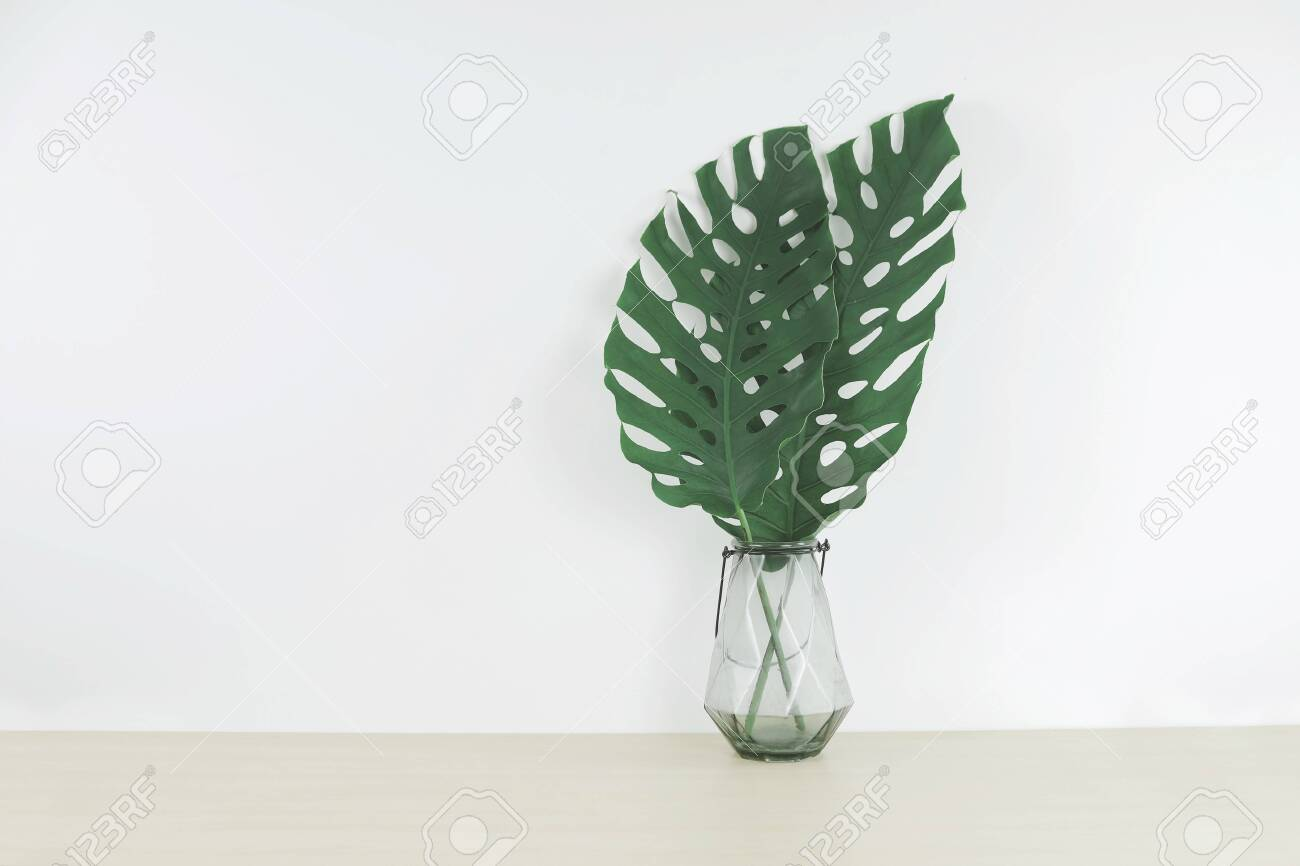 Tropical Leaves In A Glass Vase On Wood Table Front View Space Stock Photo Picture And Royalty Free Image Image 138176122 Tropical rainforests are an important ecosystem with distinct characteristics and adaptations. 123rf com