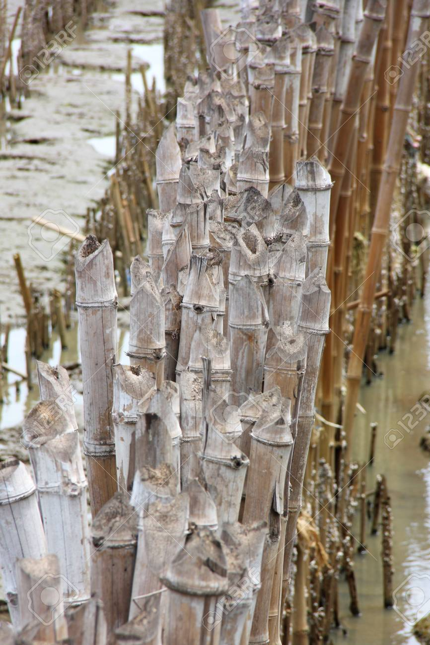 a445bdb3b1b7 row of cane or bamboo on the esteury Stock Photo - 14600215