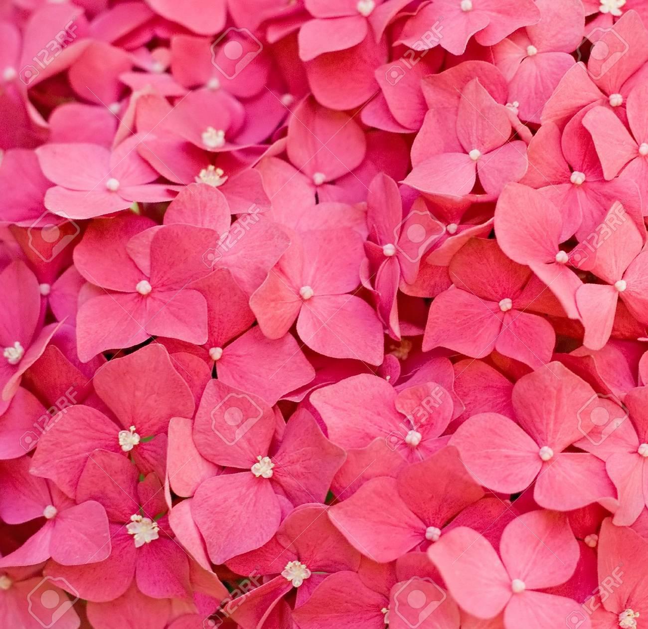 Flowers Stock Photo - 7951643