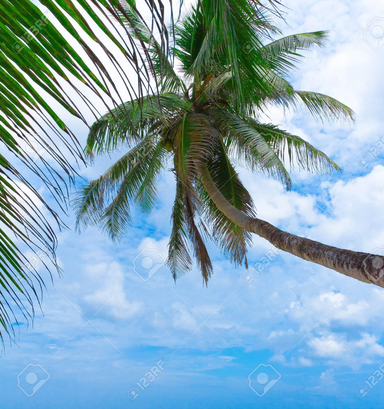 Palm Sea Exotic Stock Photo - 10667445