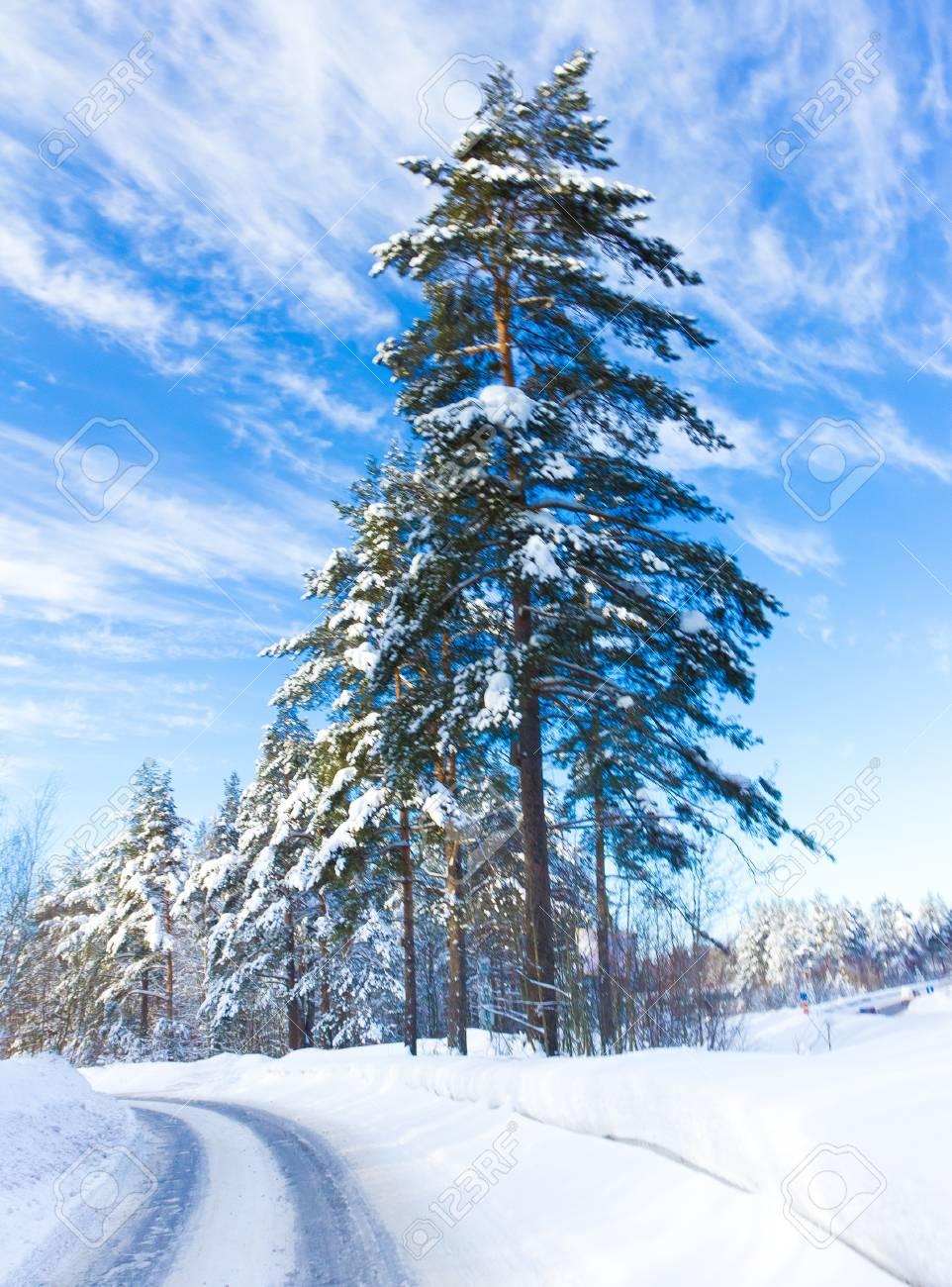 Forever Winter! Stock Photo - 10719176