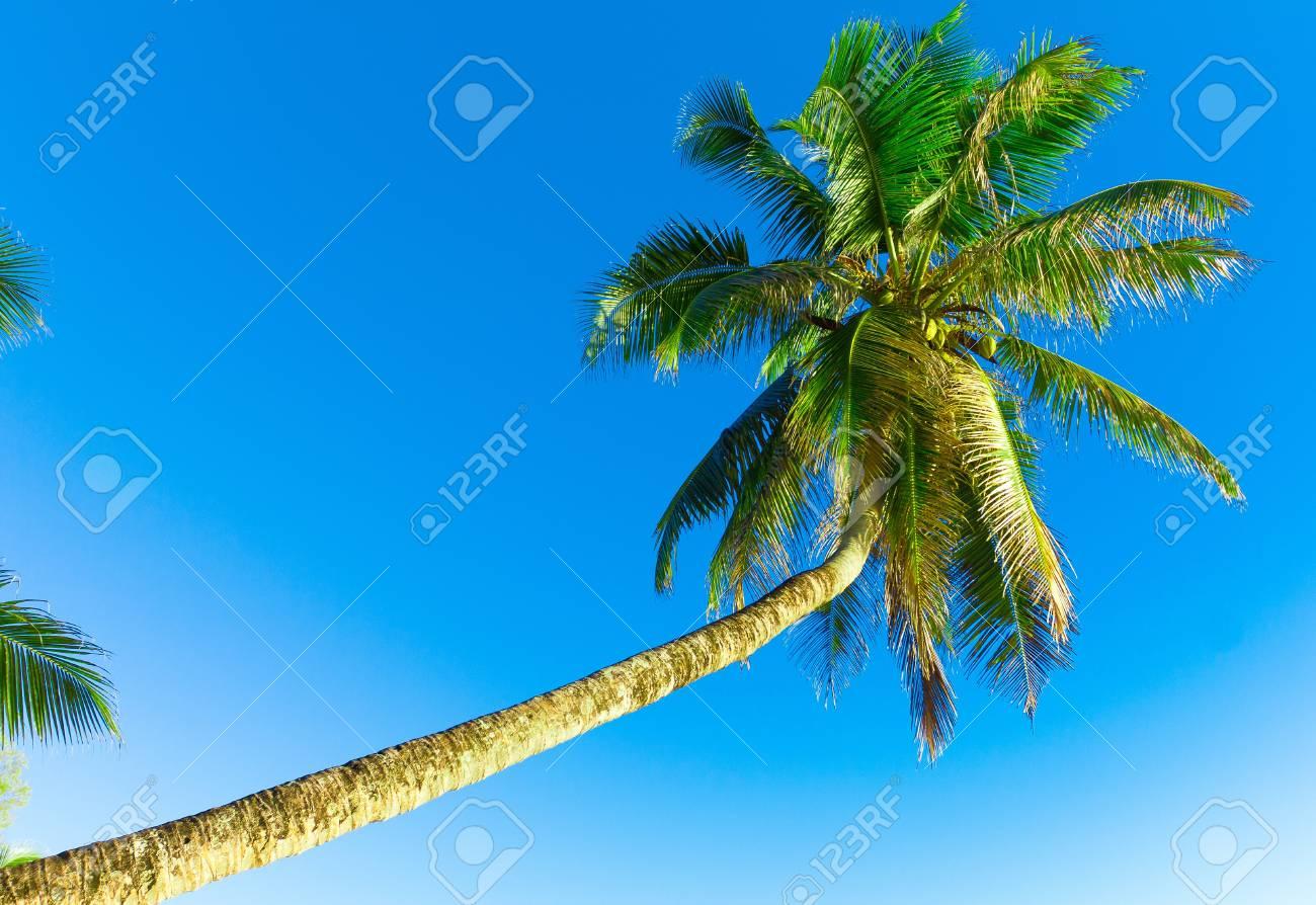 Overhanging Scene Palm Stock Photo - 10719038