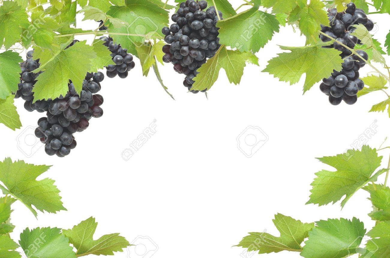 Frische Weinrebe Rahmen Mit Schwarzen Trauben, Isoliert Auf Weißem ...
