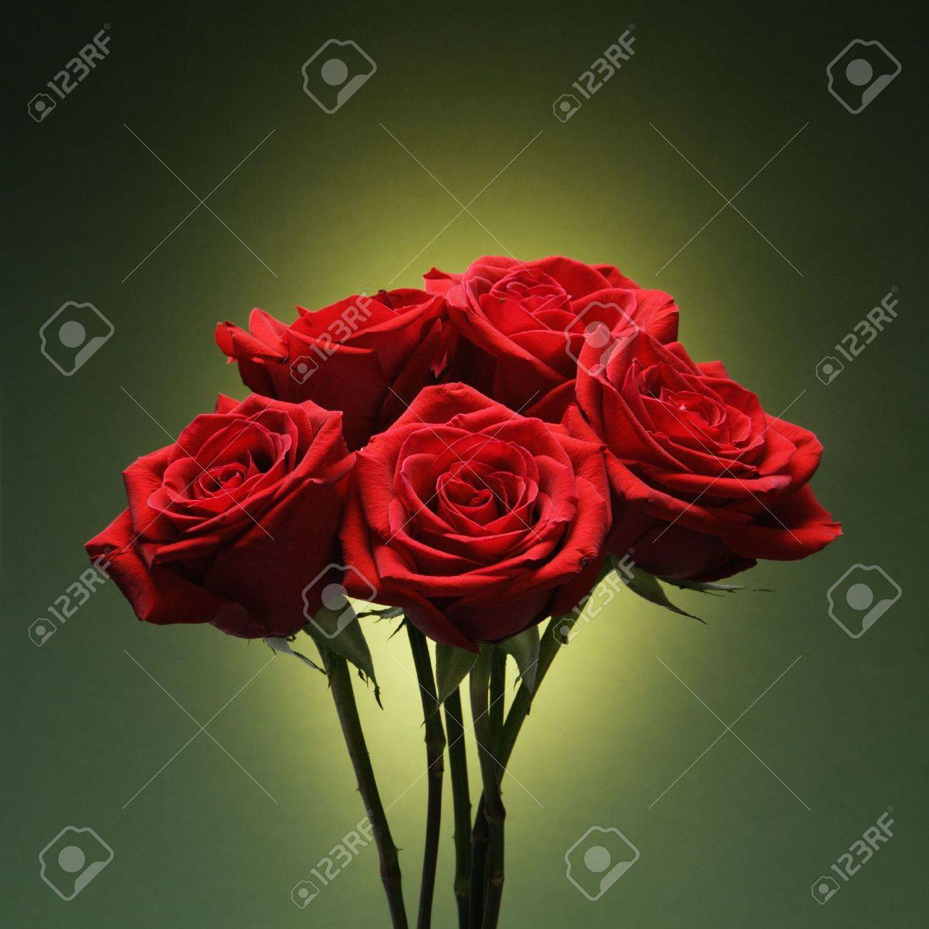Bouquet of red roses against glowing green background. Stock Photo - 2190271