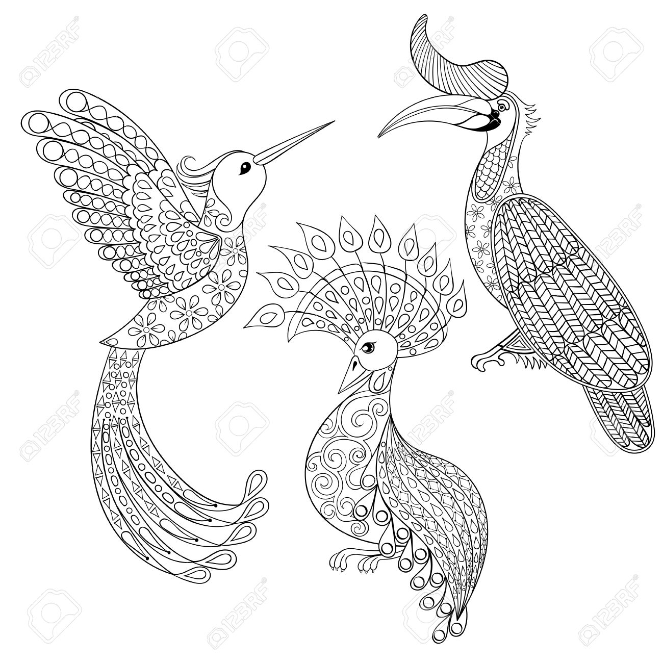 Coloring Page With Bird Rhinoceros Hummingbird And Exotic Zentangle Illustartion For Adult