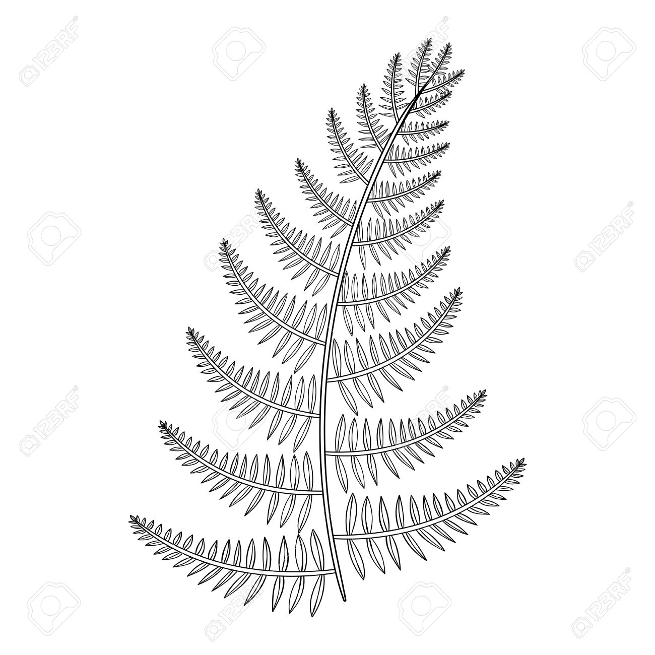 Zentangle Vector Male Fern For Tattoo In Boho Hipster Style