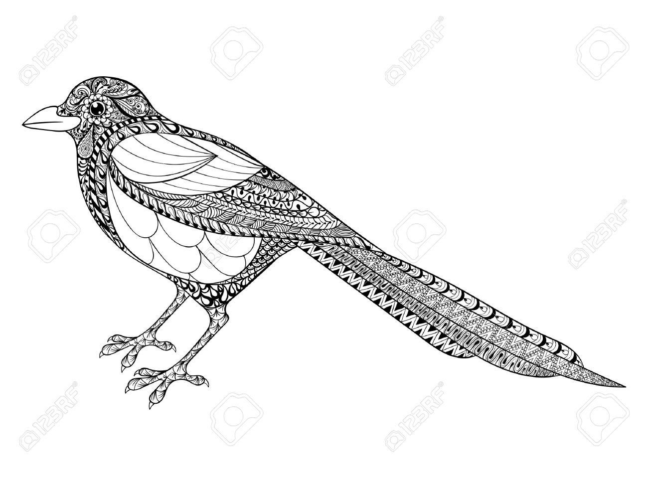 Hand Drawn Magpie Illustration For Antistress Coloring Page With High  Details Isolated On White Background,