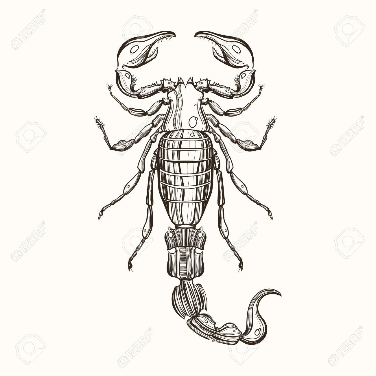Hand Gezeichnet Gravur Skizze Von Scorpion Vektor Illustration Für