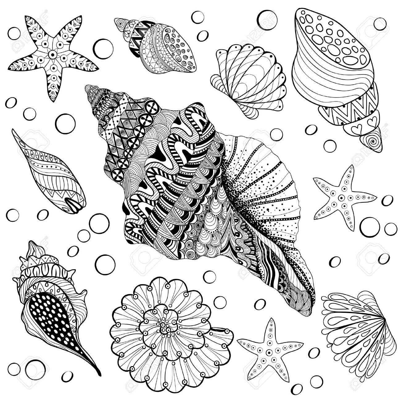 Vector Conjunto Conchas, Seeshell Zentangle Para Colorear Páginas ...