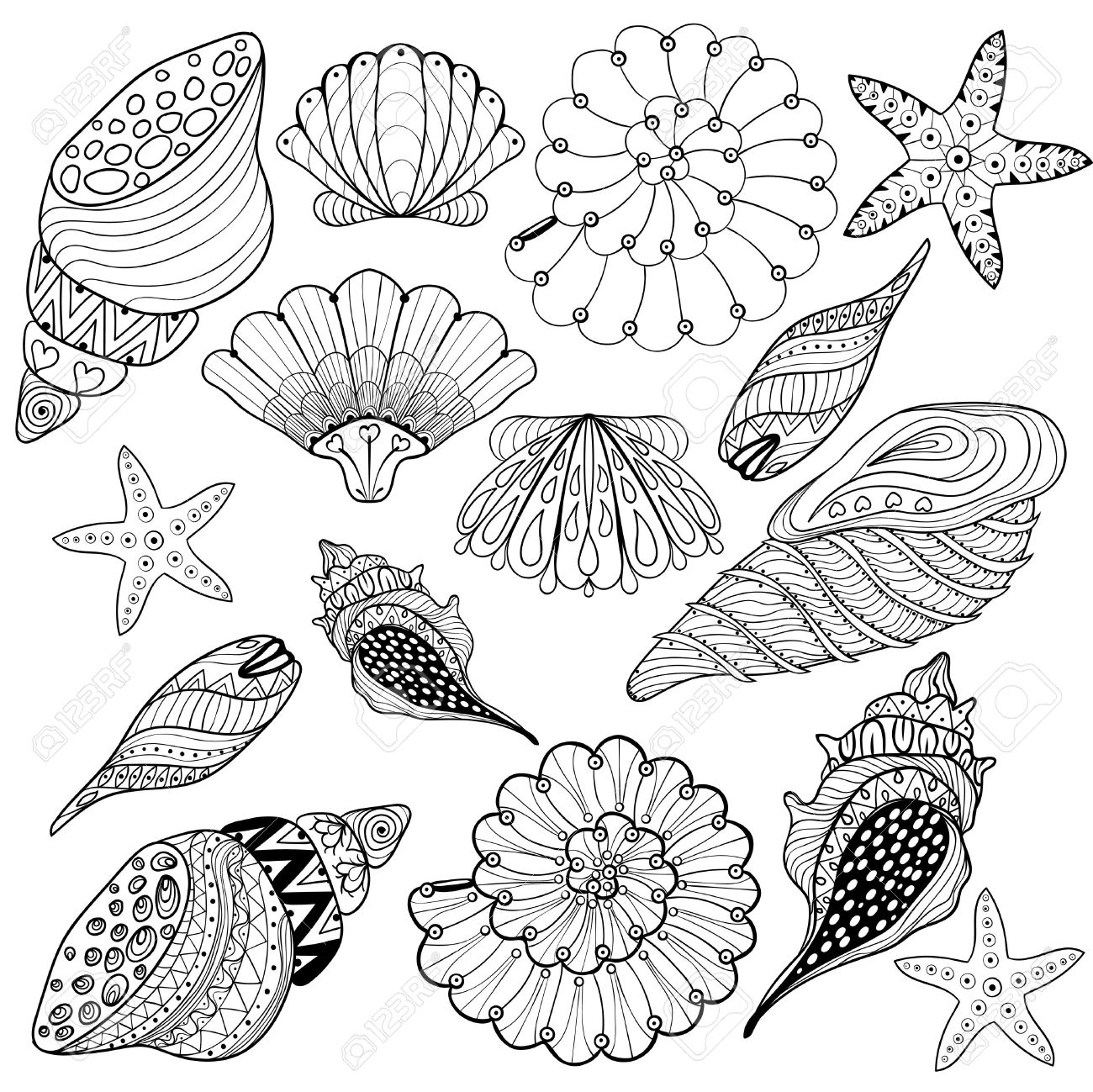 Vector Conjunto Conchas Conchas Marinas Zentangle Para Colorear