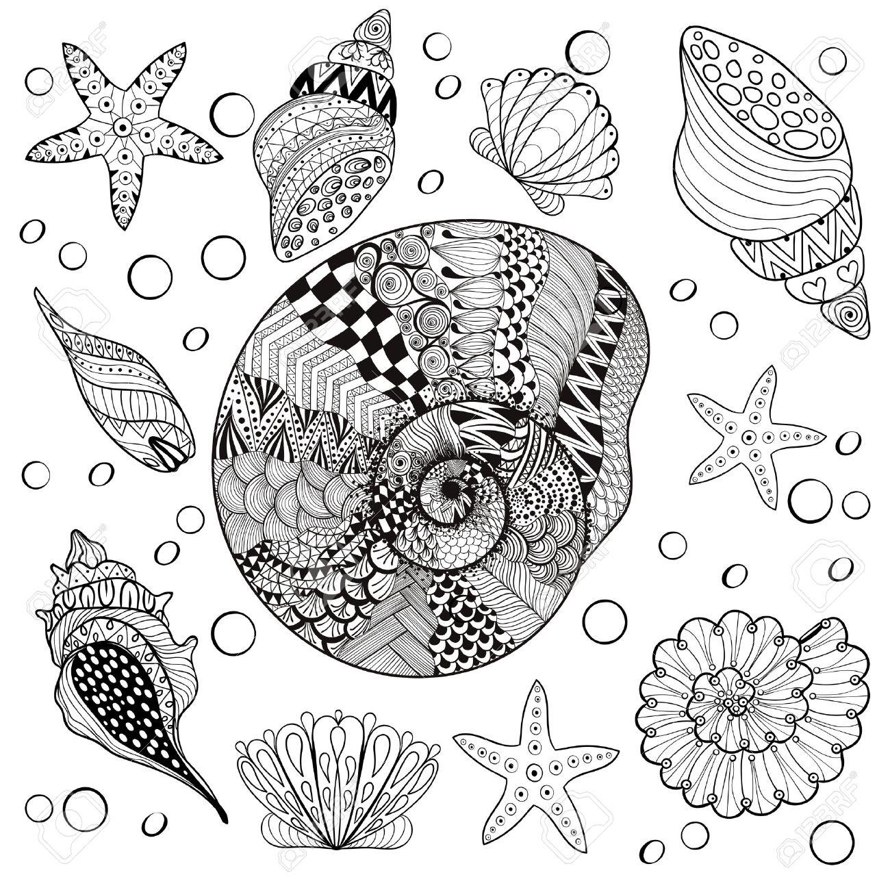 Vektor-Set Sea Shells, Zentangle Shelsl Für Erwachsene Anti-Stress ...