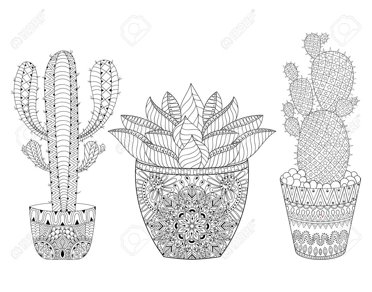 Entangle Cactus Set Illustration Outline Desert Plants Pot