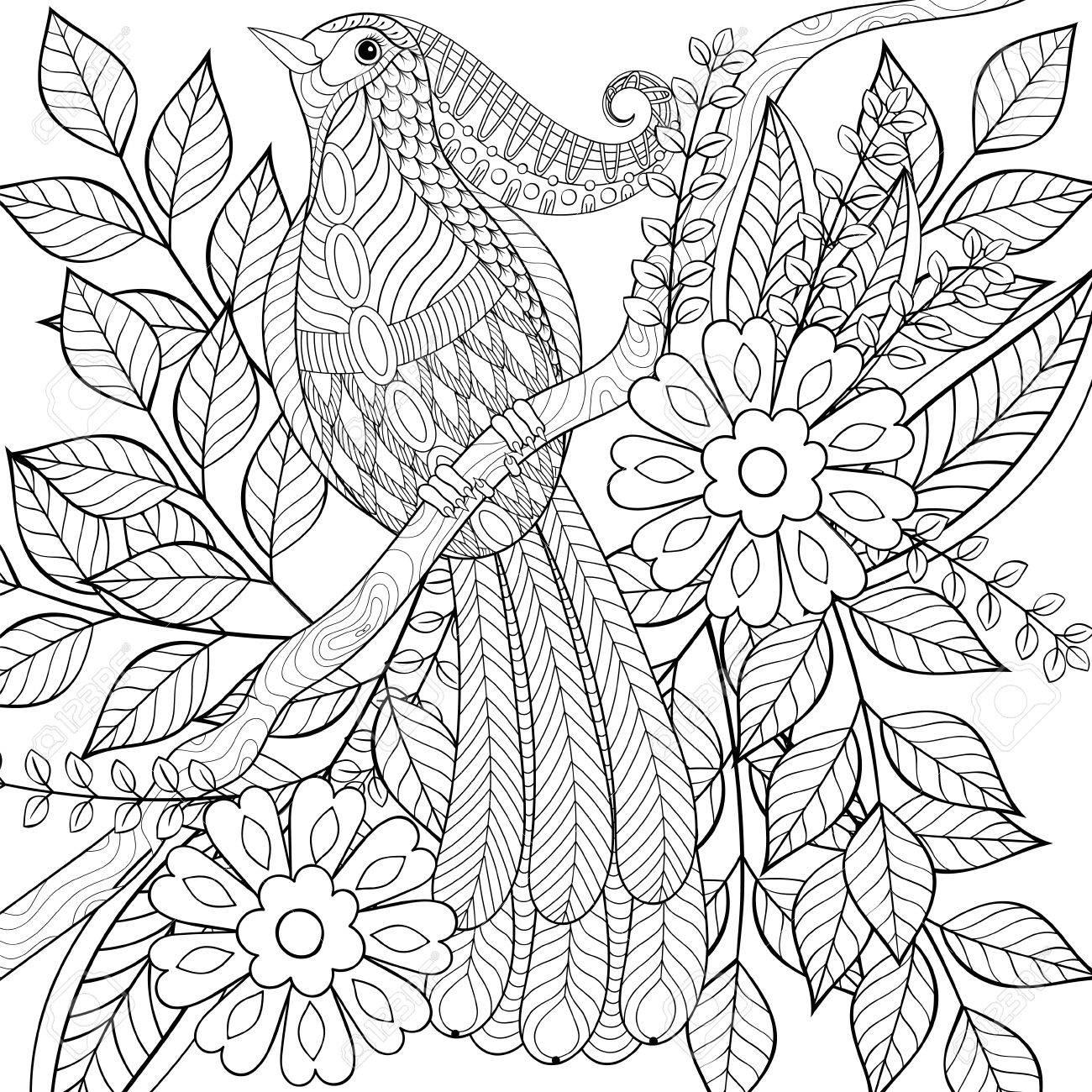 Adulte Anti Stress Coloriage Oiseau Tropical Exotique Dessiné à La Main Zentangle Assis Sur Une Branche D Arbre Fleurissant Avec Des Fleurs Mignonnes