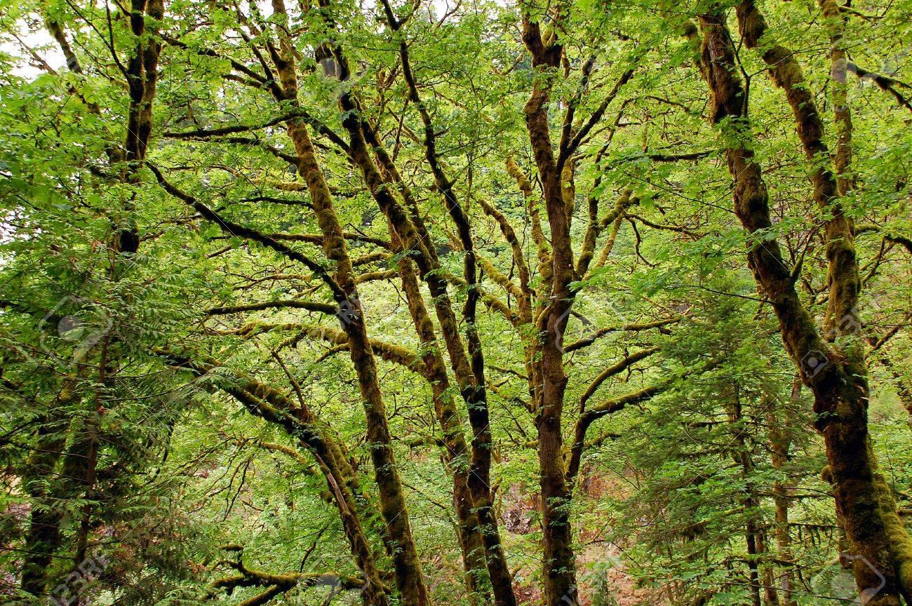 Rainforest Stock Photo - 3255604