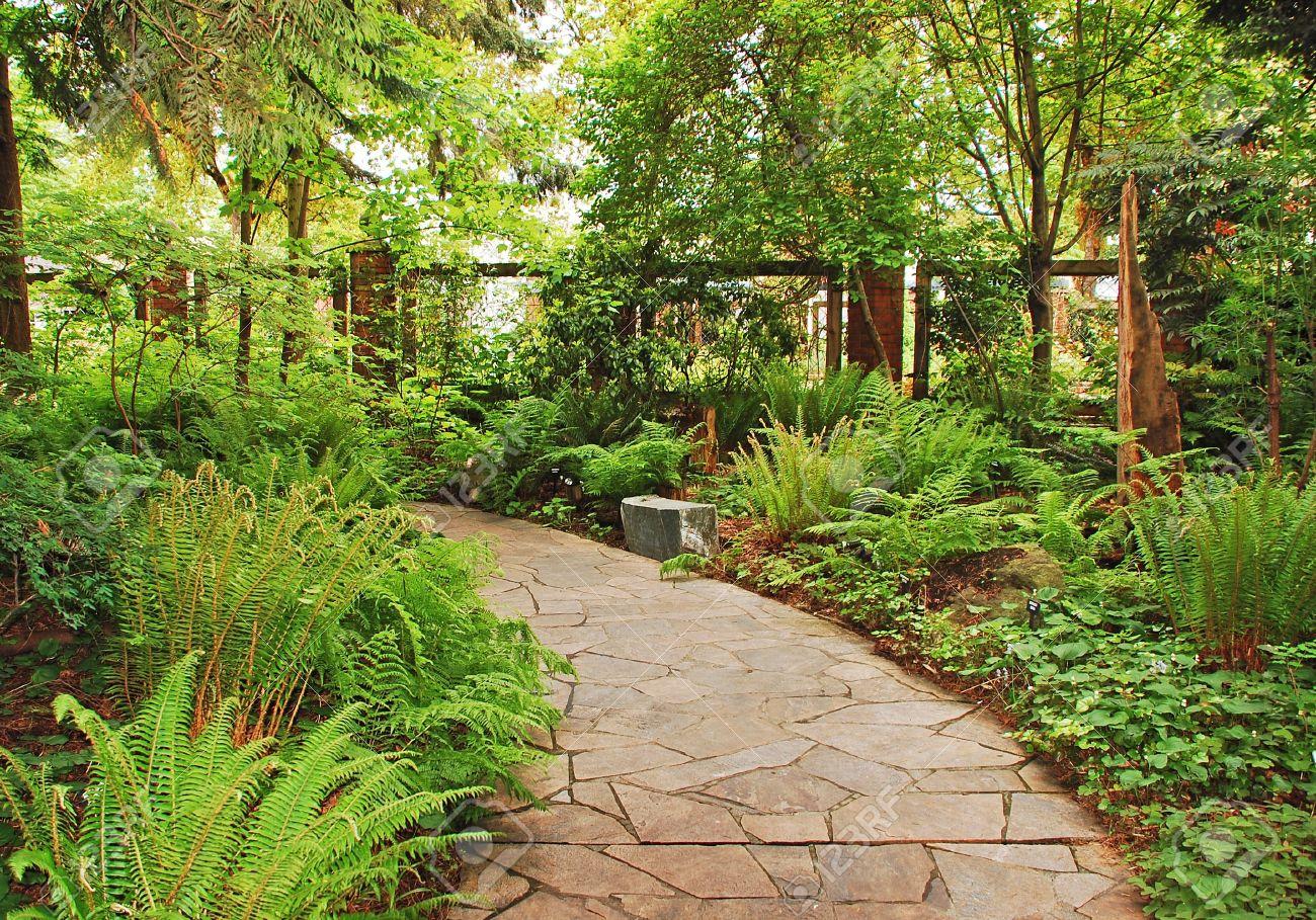 Lush fern garden Stock Photo - 9732644