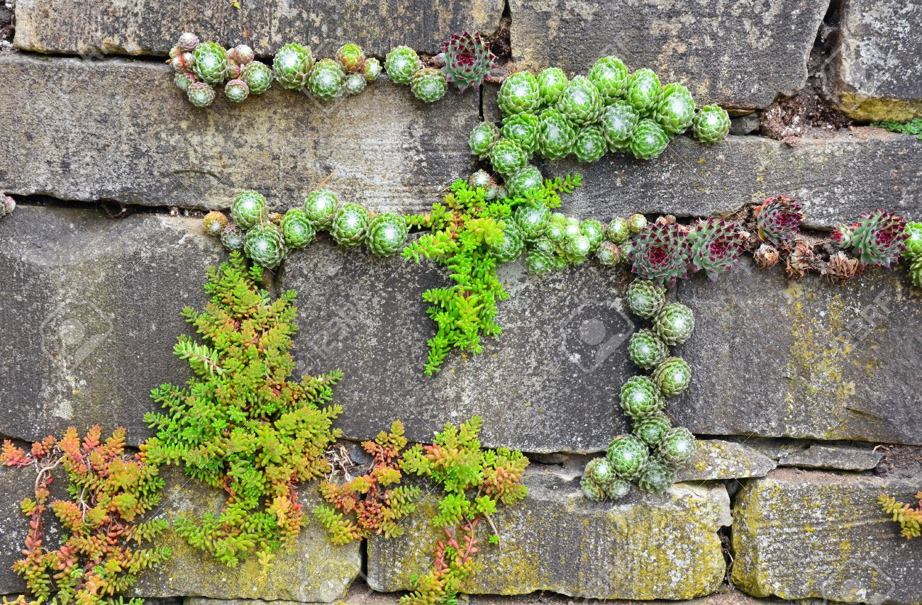 Plants Growing Out Of Old Brick Garden Wall Stock Photo Picture And Royalty Free Image Image 17251685