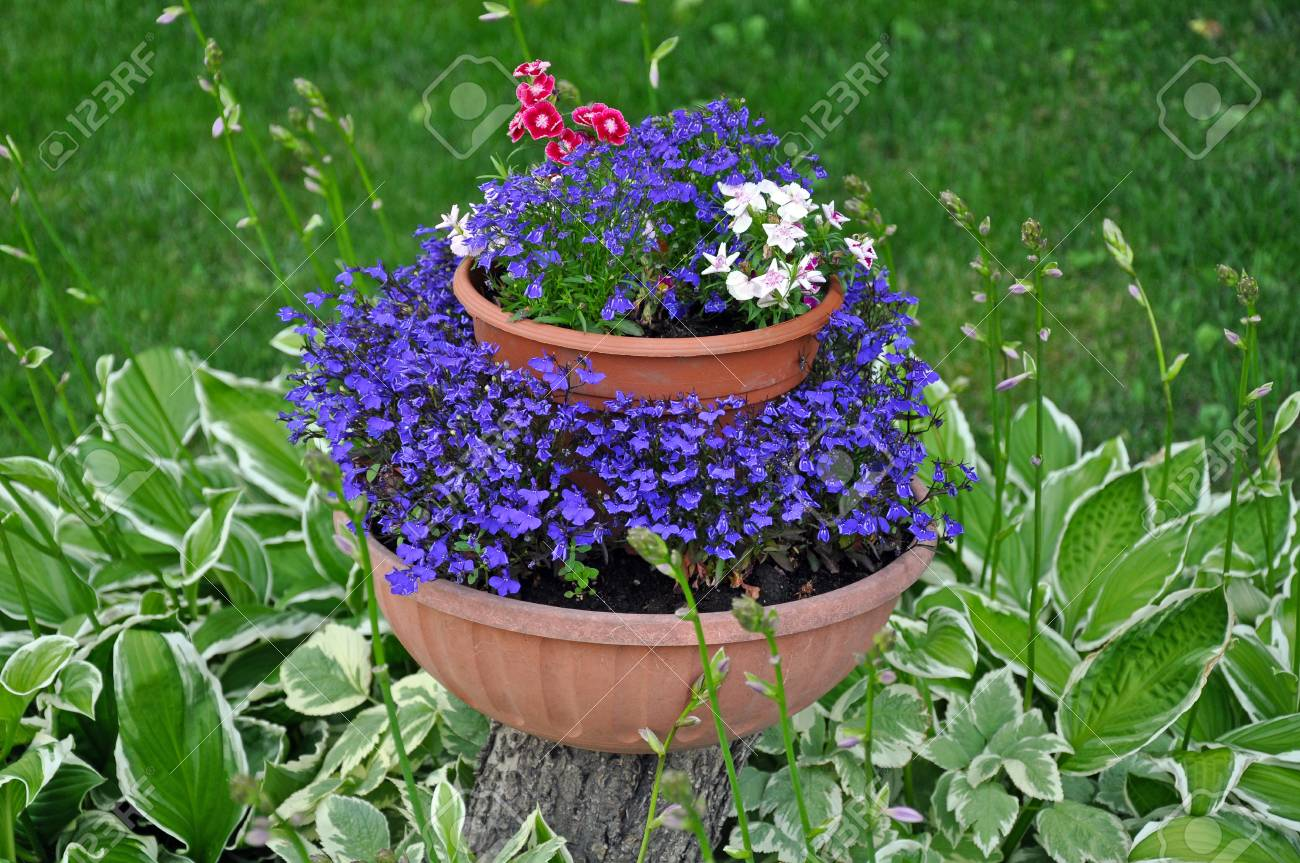 Pretty Violet Flowers In Planter On Tree Stump Surrounded By Stock