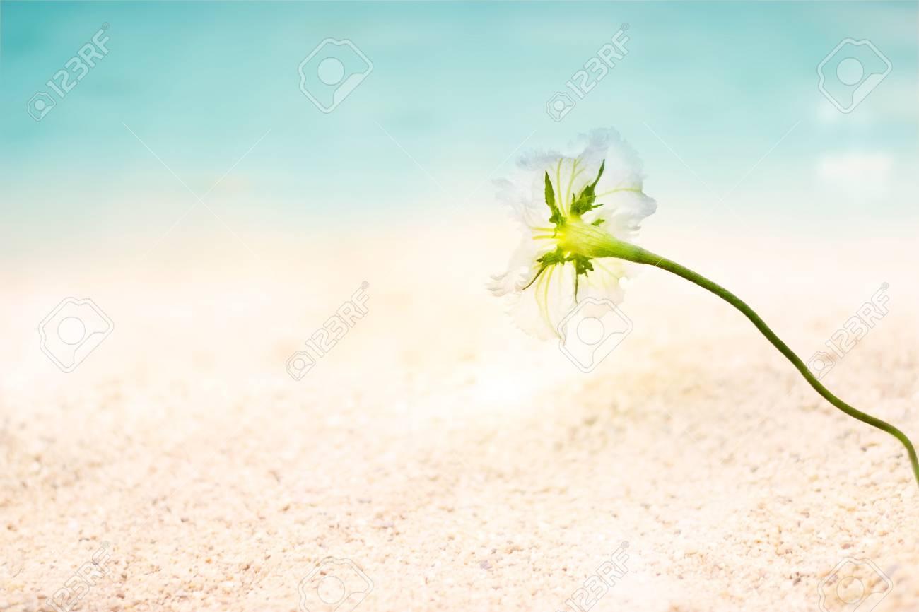 Immagini Stock Fiori Astratti Mare Sul Mare Di Sabbia Spiaggia Di