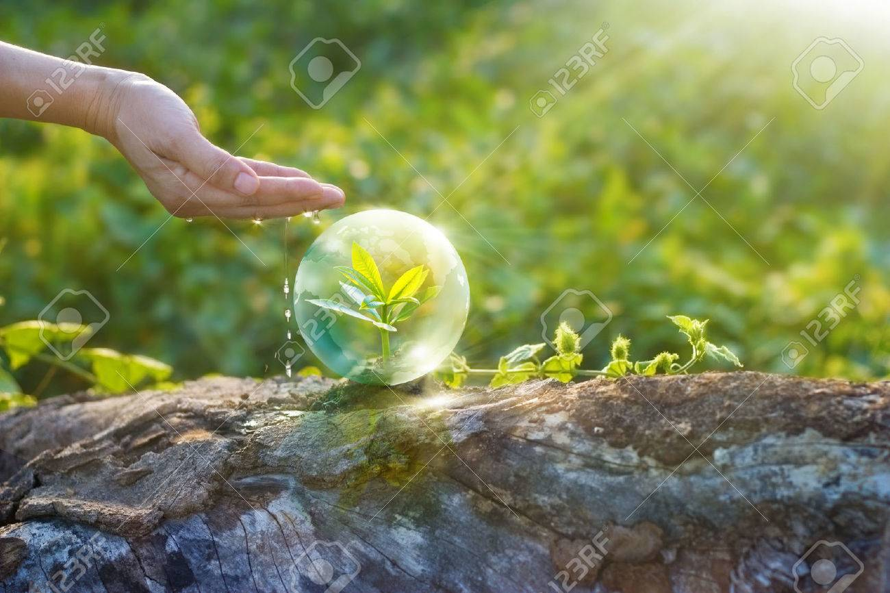 hand watering and protecting globe of young tree resting on a timber, environment concept Standard-Bild - 60003179