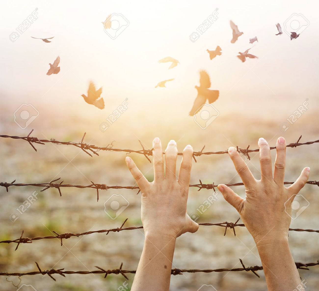 Woman hands hold the rusty sharp bare wire with hope longing for freedom among flying birds, Human rights concept Standard-Bild - 65036599