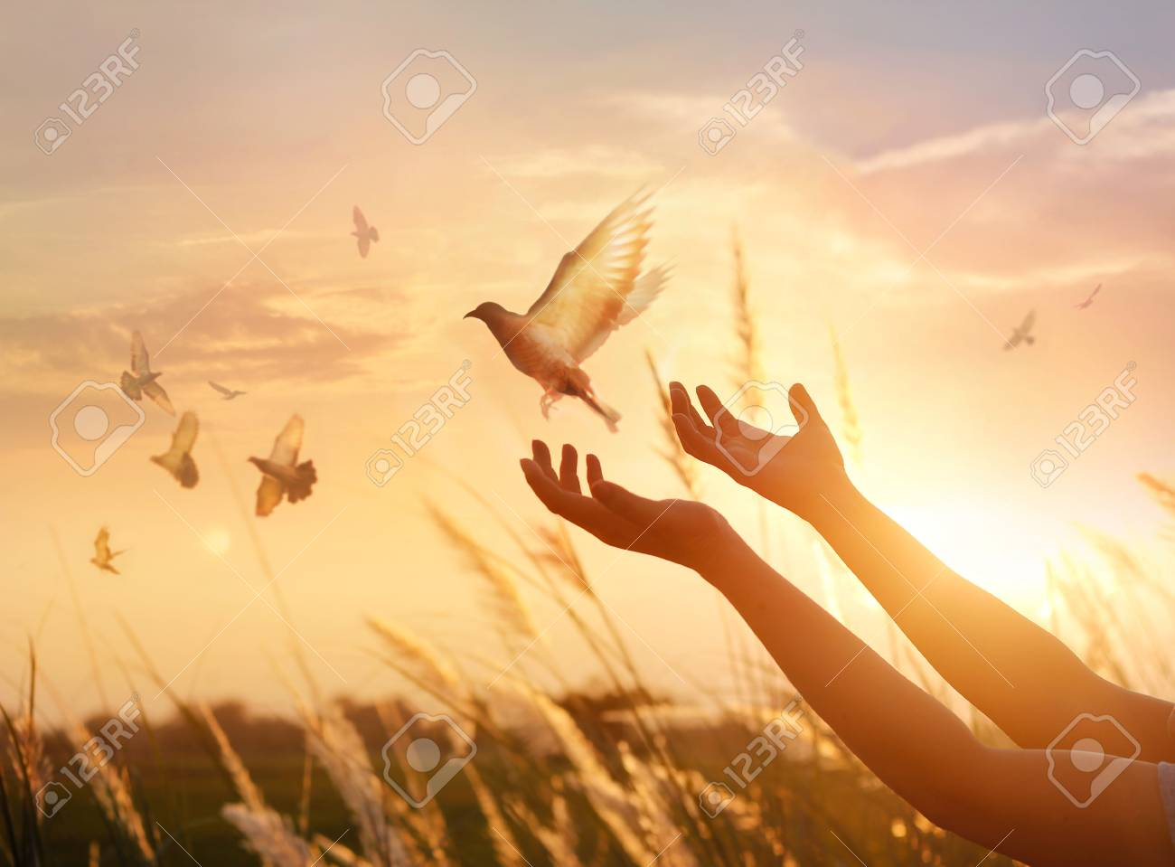 Woman praying and free bird enjoying nature on sunset background, hope concept - 97229054