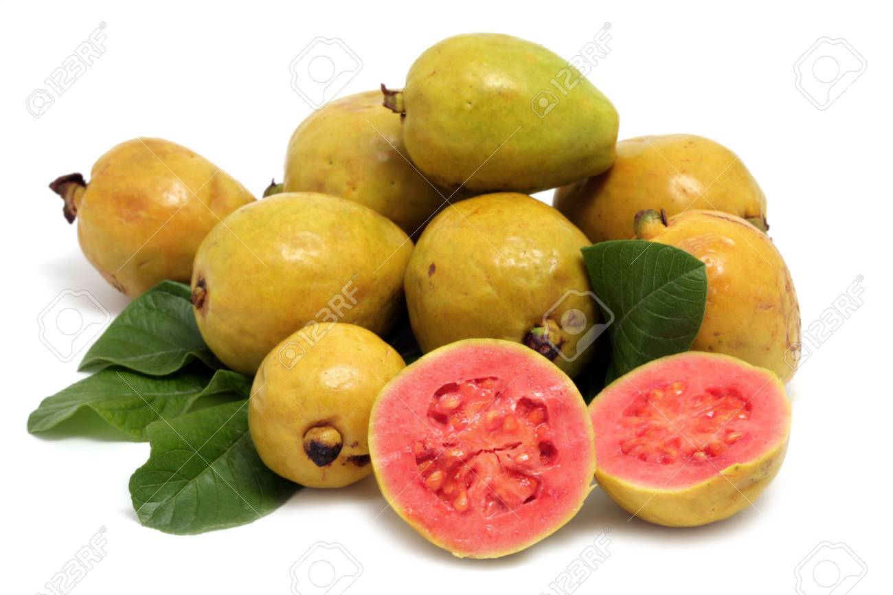 Fresh Guava fruit with leaves on white background - 5760728
