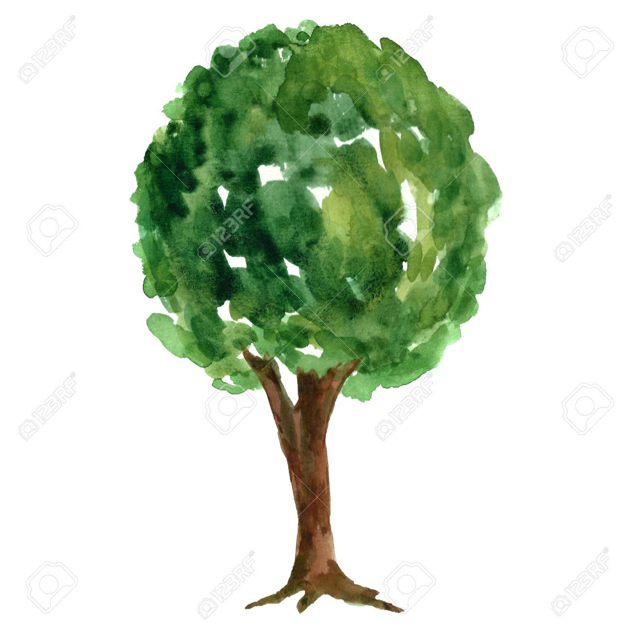 Watercolor Green Tree. Stock Photo, Picture And Royalty Free Image ...