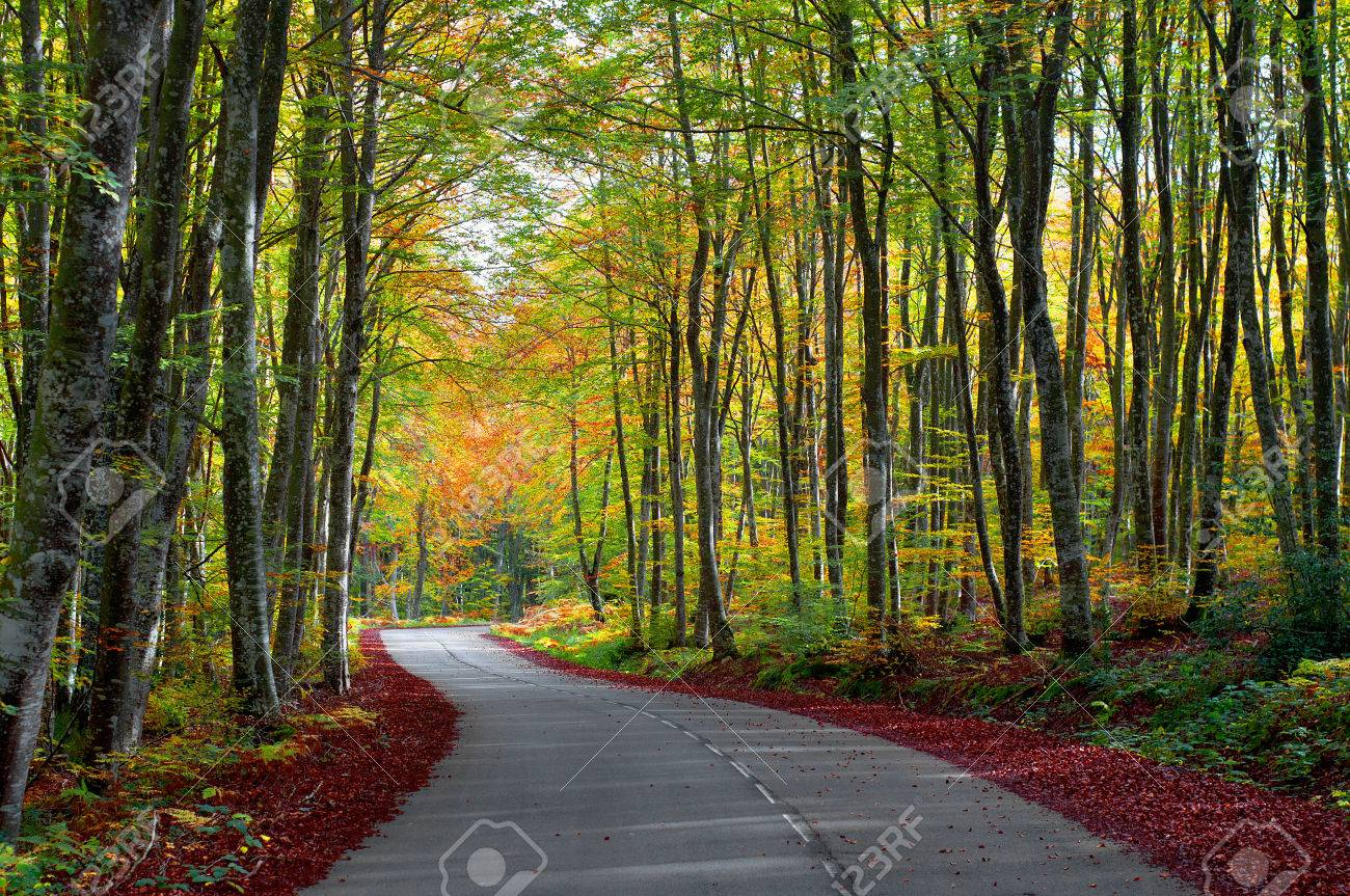 Road In The Forest In Autumn, Fall Colors Stock Photo, Picture And ...