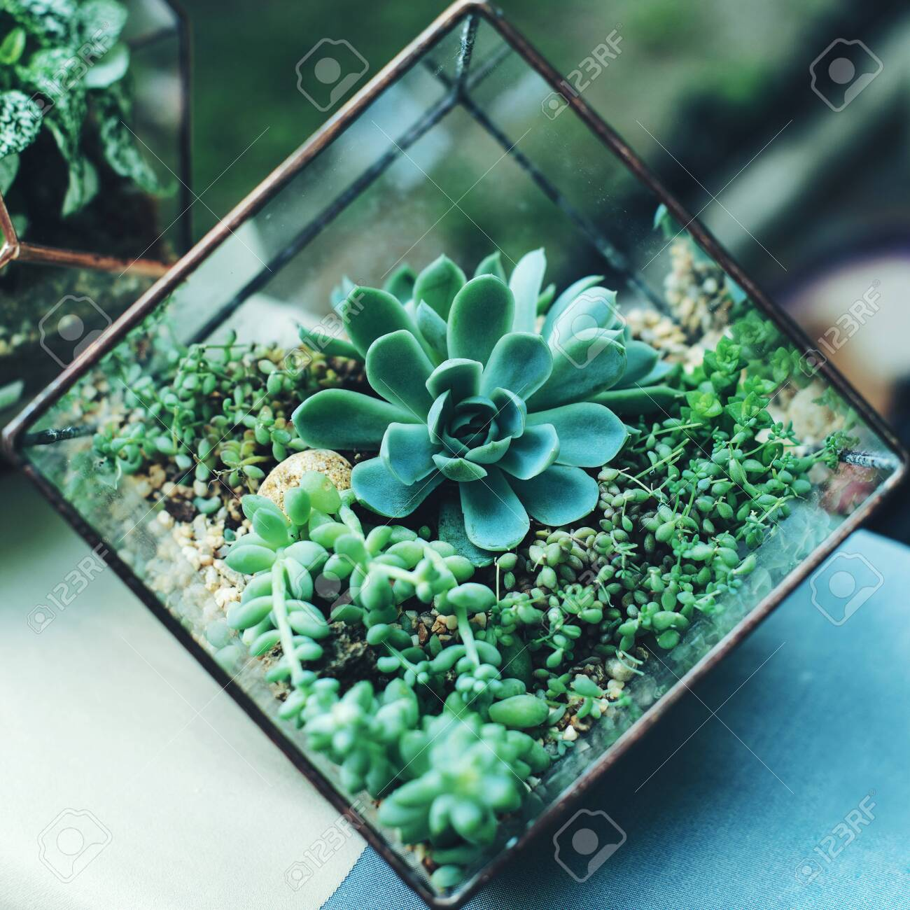 Mini Succulent Garden In Glass Terrarium At Summer Stock Photo Picture And Royalty Free Image Image 137795541