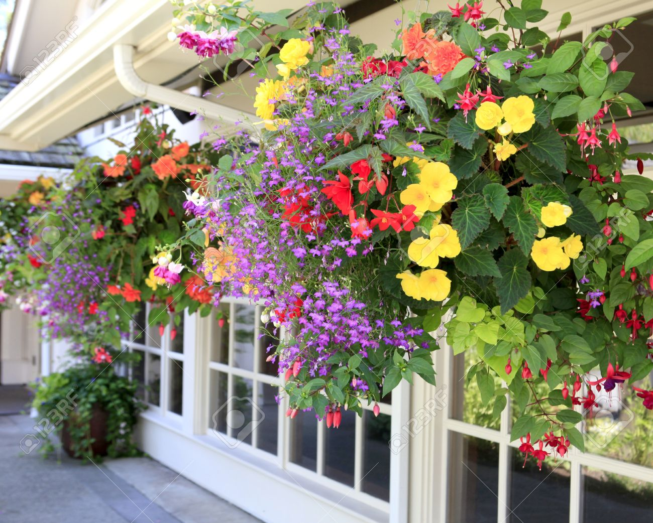 Outside house windows - Multiple Hanging Bastets With Flowers Outside Of House Windows Stock Photo 15796205