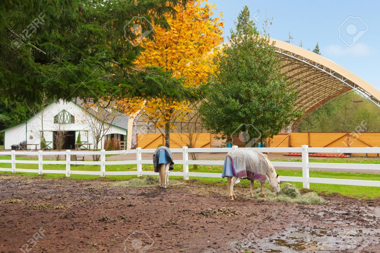 Northwest horse rach with fall changing leaves and white fence. Stock Photo - 23131493