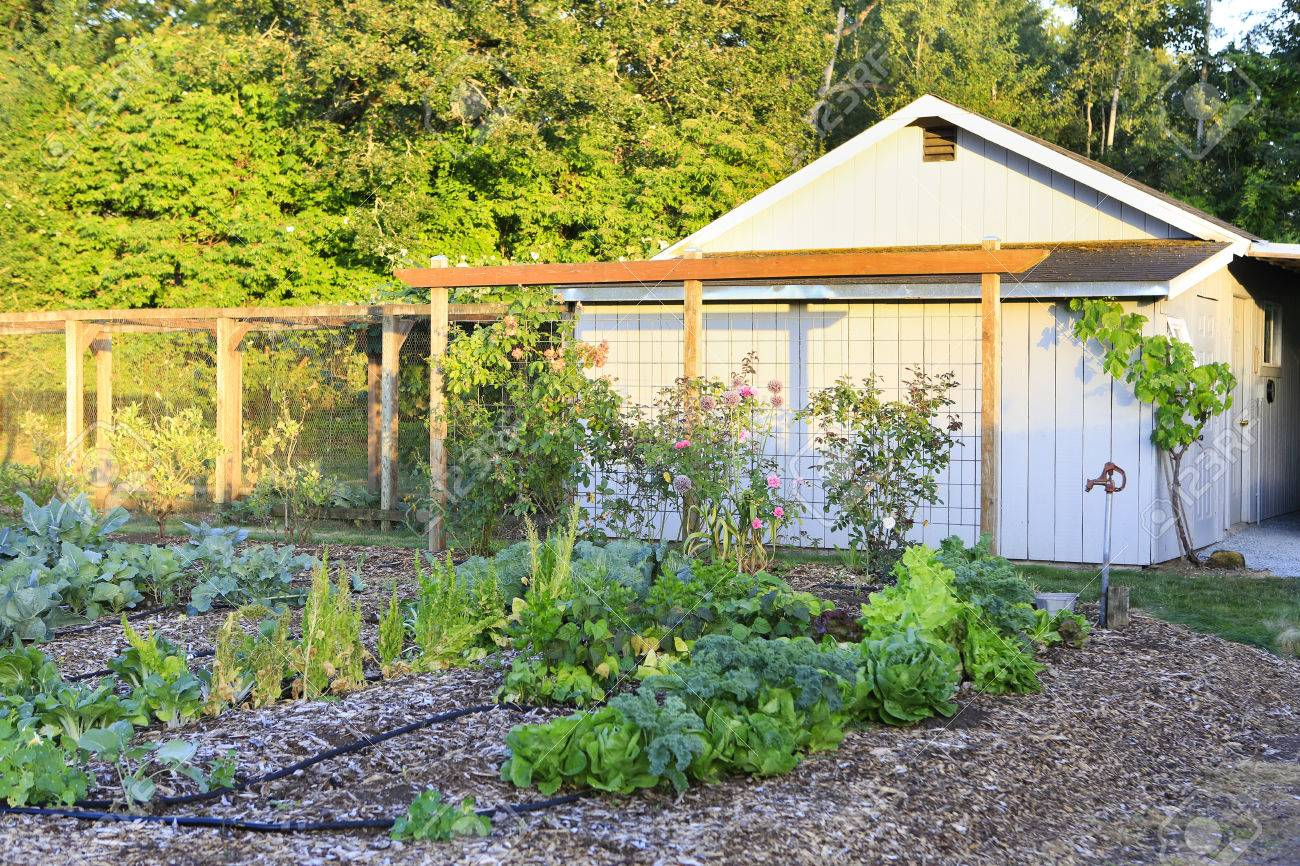 wood shed with grape trellis and garden bed overlooking beautiful