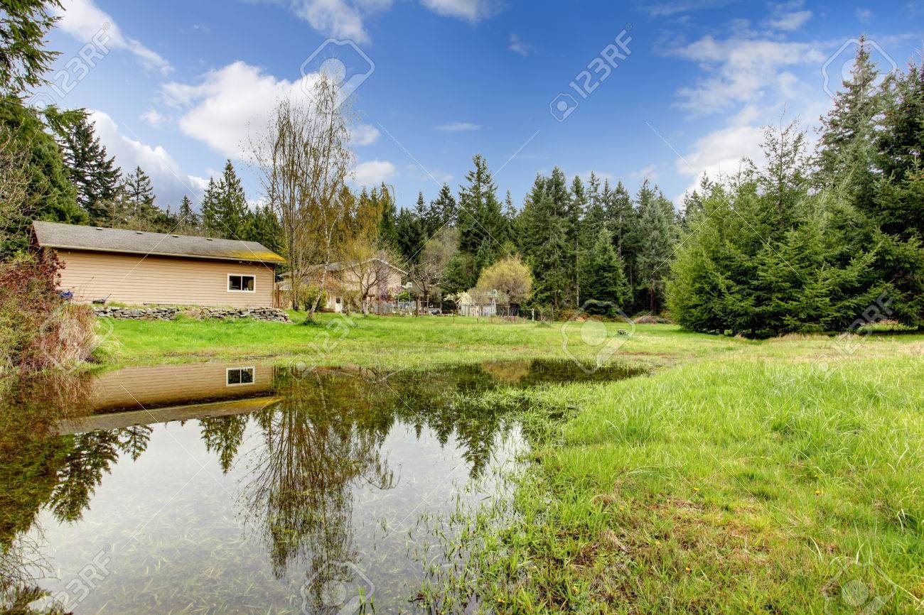 green backyard with shed forest and small pond stock photo