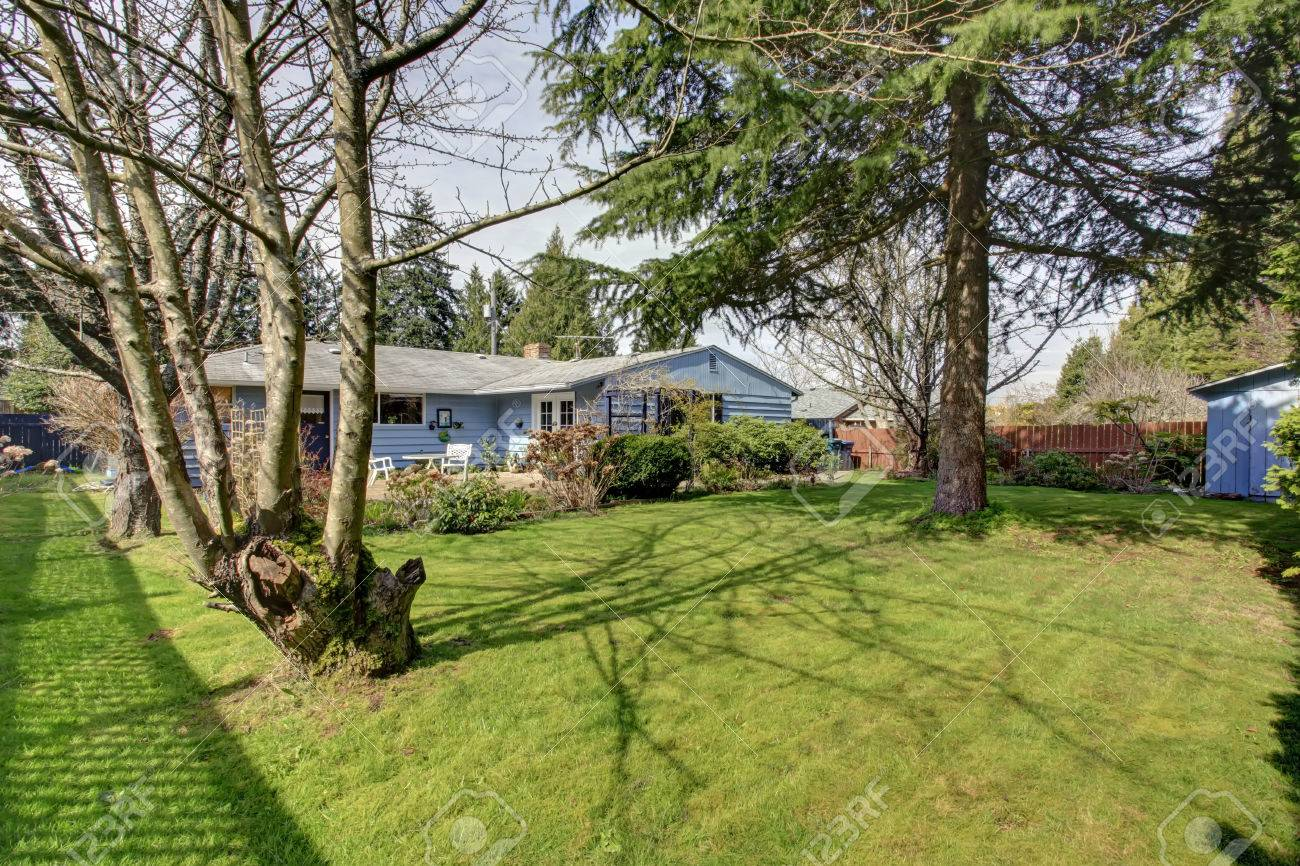 Blue Siding House With Big Backyard With Green Lawn And Fir Tree