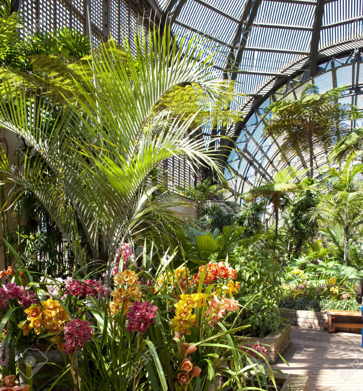 Balboa Park Botanical Building With Orchids And Palm Trees And Interior  Walls Stock Photo   27850432