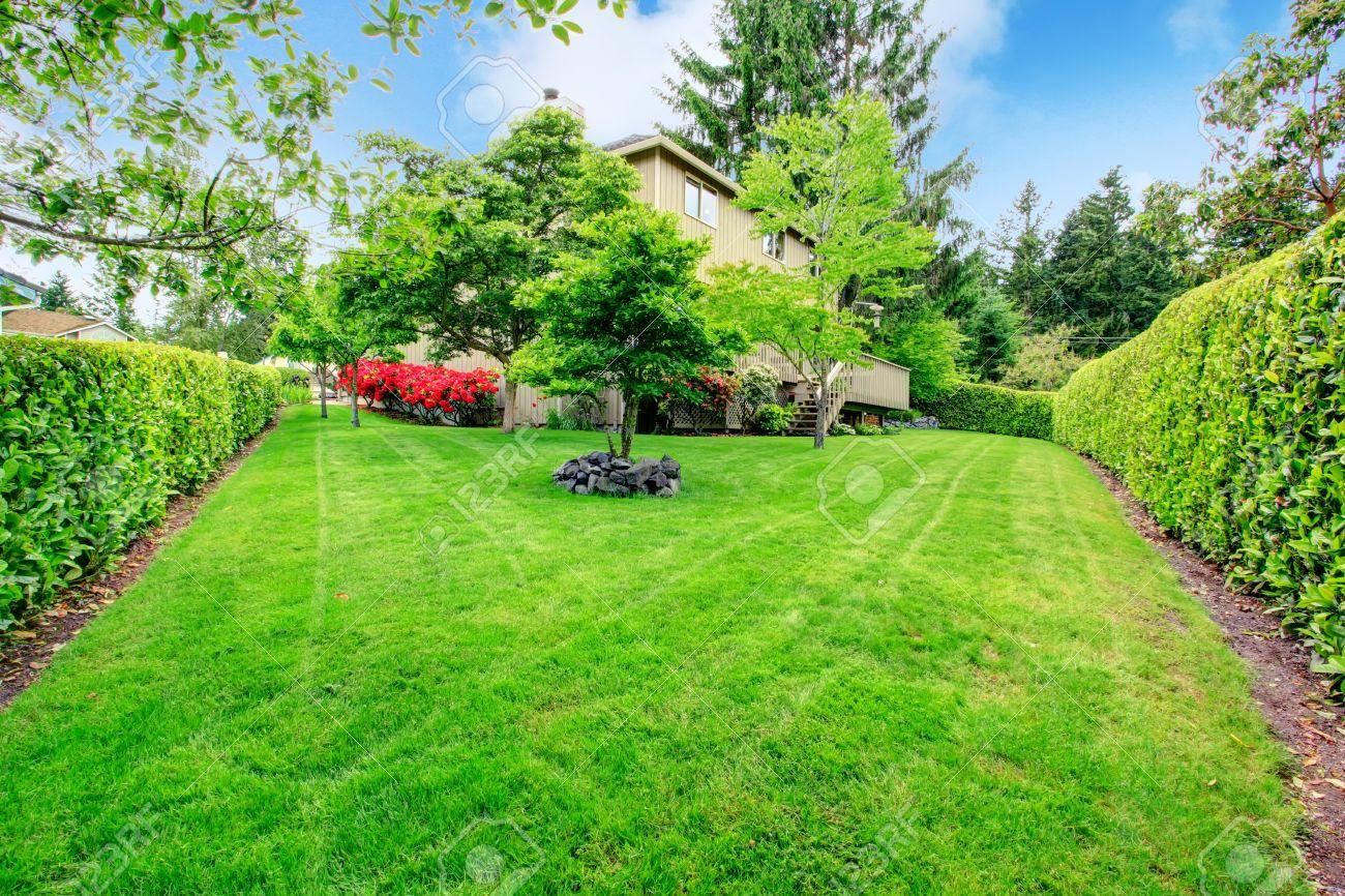 grüne hinterhof garten mit bäumen, hecken und blühende sträucher