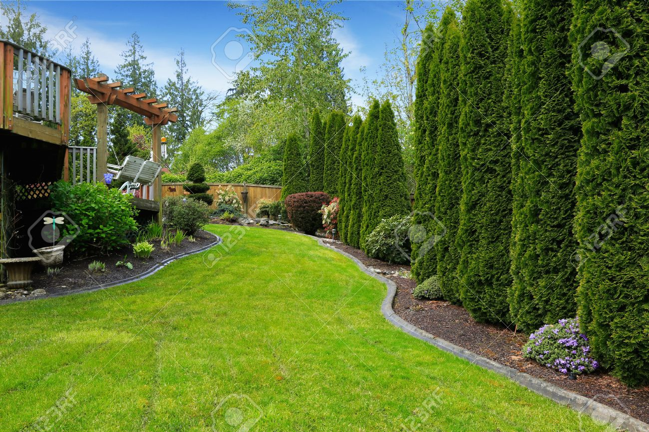 Backyard View fenced backyard with landscape. decorative trees alongside with