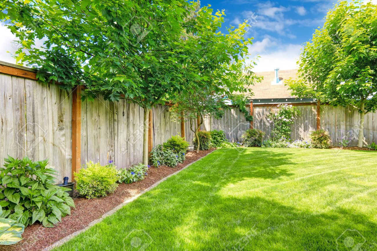 Backyard With Wooden Fence Green Lawn And Flower Bed With Maple Stock Photo Picture And Royalty Free Image Image 31999454
