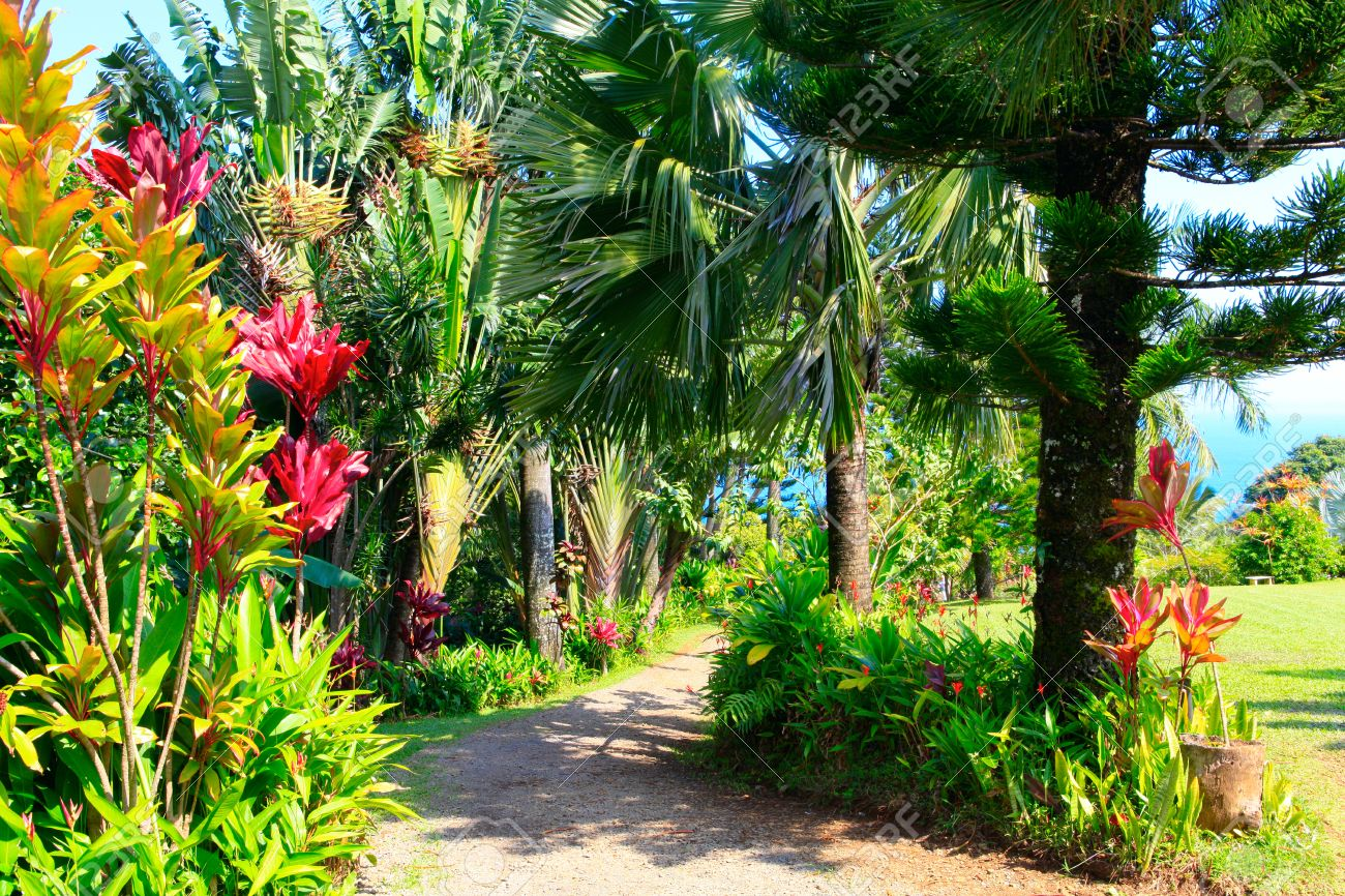 A Tropical Garden With Flowers And Palm Trees Overlooking The ...