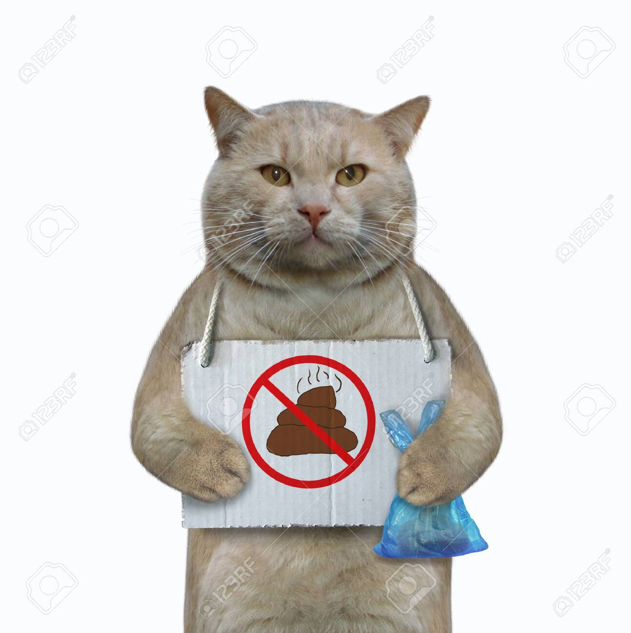 """The cat has a sign around his neck that says """" no pooping """". He holds a blue plastic bag with poop. White background. Isolated. - 144753999"""