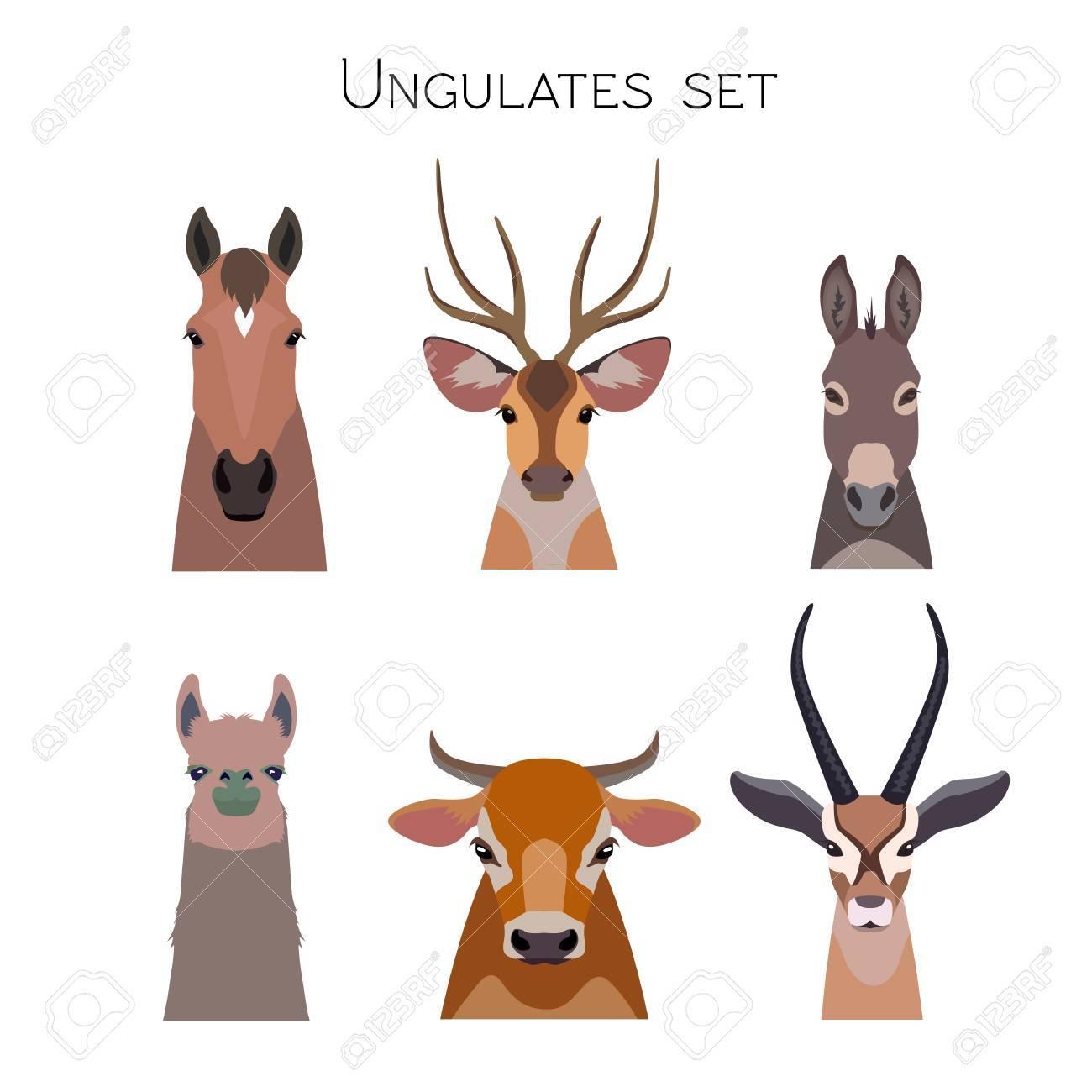 ばらばらベクトル有蹄類では、動物セット有蹄類。・ ラマ鹿、カモシカ