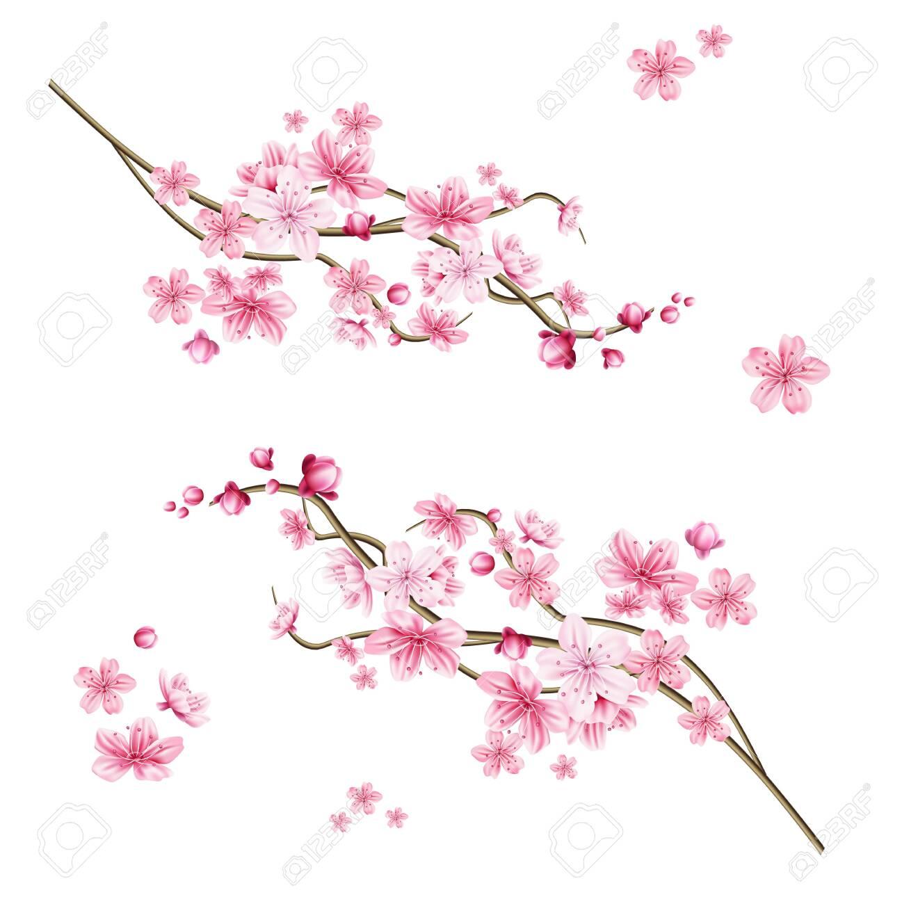 Realistic sakura tree branch. Elegant japanese symbol. Blooming plant twig with pink flower petals. Asian cultural symbol. Floral spring design decoration. Vector illustration. - 124511320