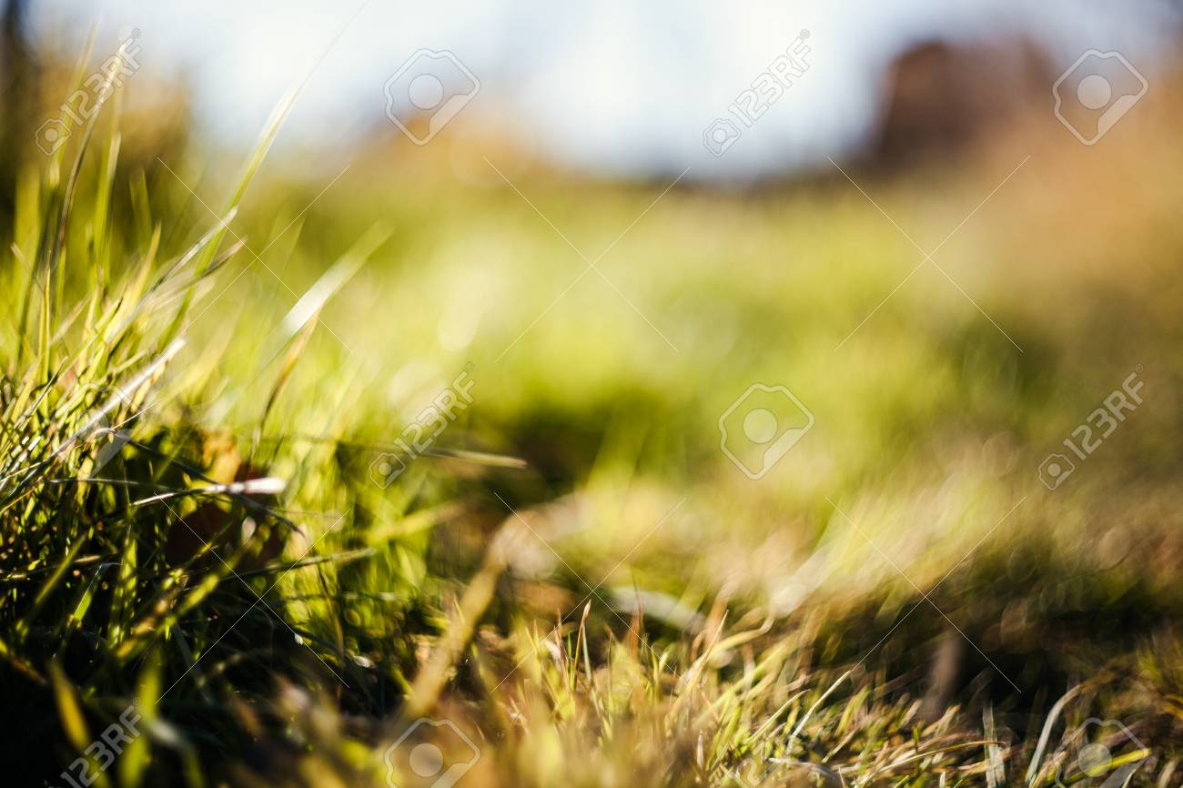 Green Grass And Dry Grass Nature Background Nature Photography Stock Photo Picture And Royalty Free Image Image 91374276