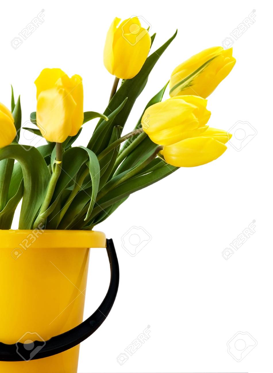 Yellow tulips in a yellow bucket. Isolated on white Stock Photo - 2527635