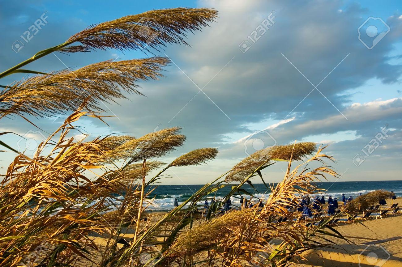 BEACH WIND